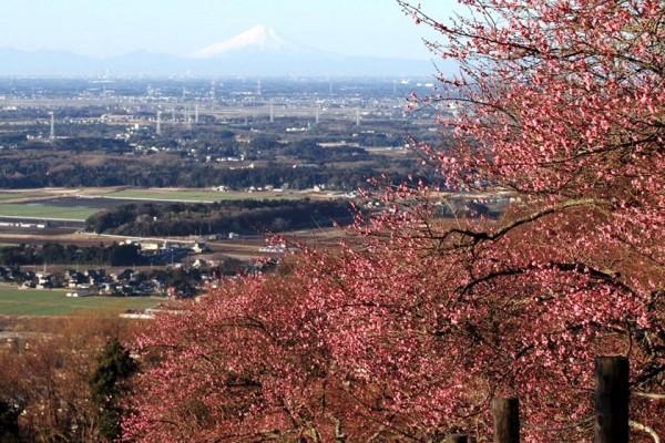 筑波山から見る富士山